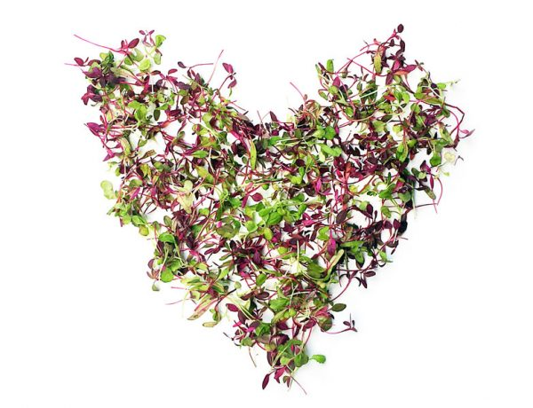 Microgreens. What's the big deal?